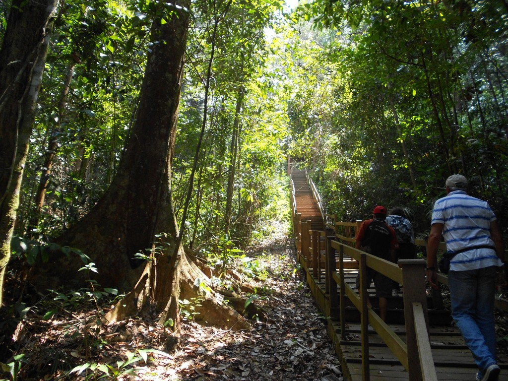 The walk up is not that difficult with the stairway path and seems to go by quickly as you explore the jungle around you.