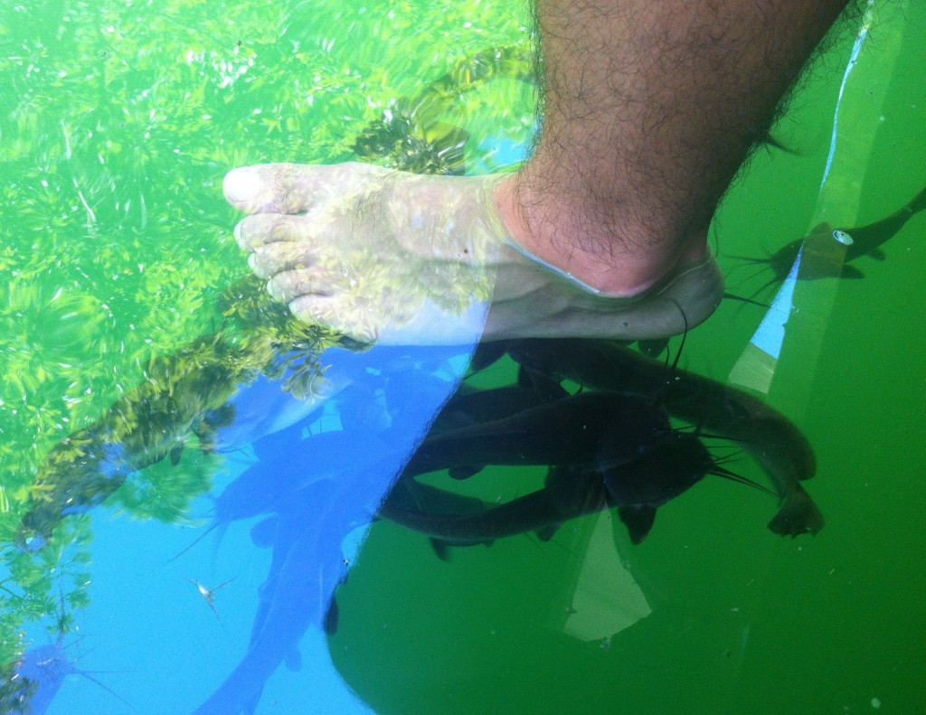Dip your feet in for a complementary catfish pedicure!
