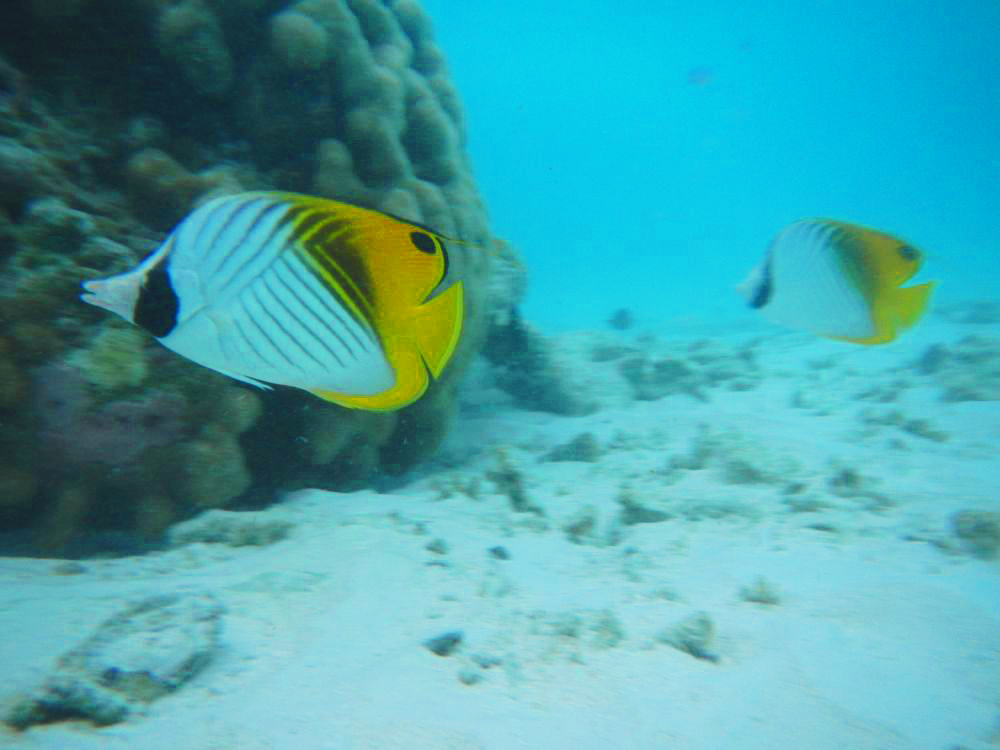 Angel fish among others didn't mind getting close and personal with us.