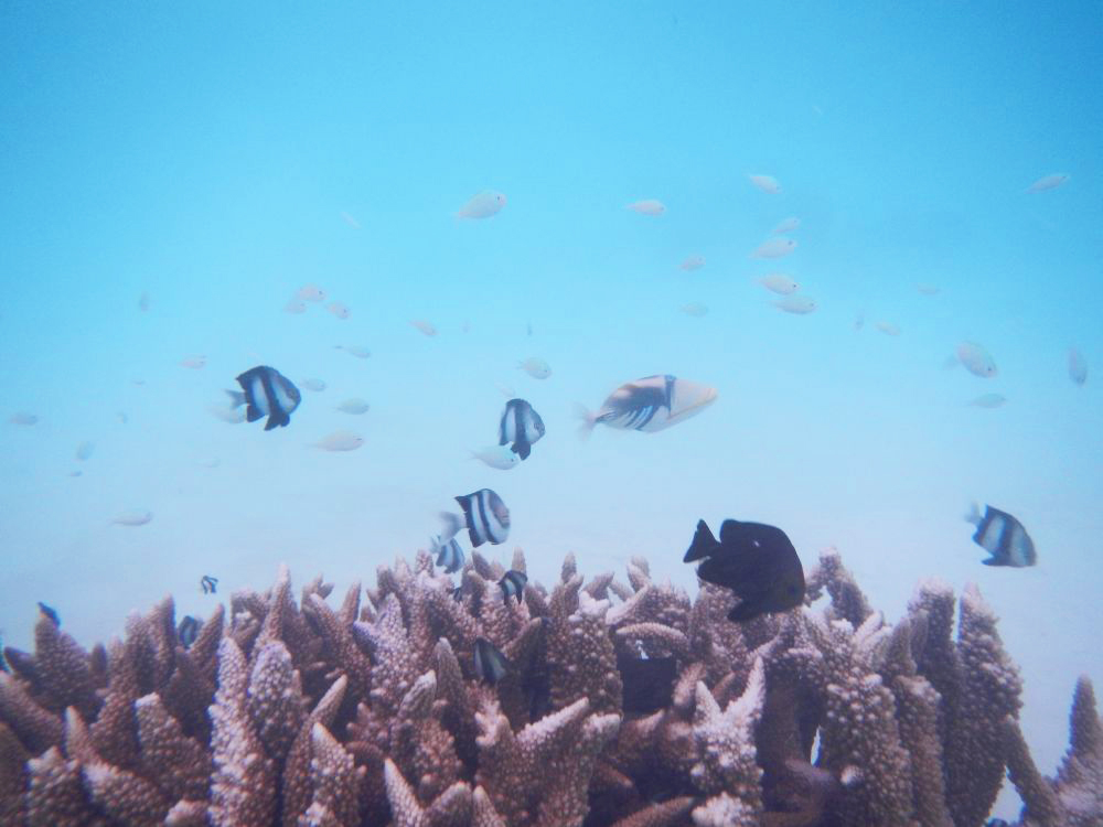 Plenty of sea-life to see in the lagoon.