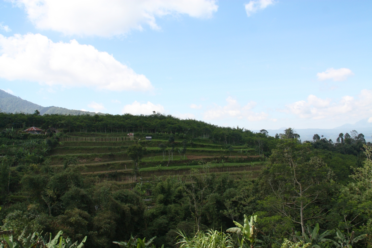 Drive south bali rice terraces world adventurer for 100 rice terrace drive columbia sc