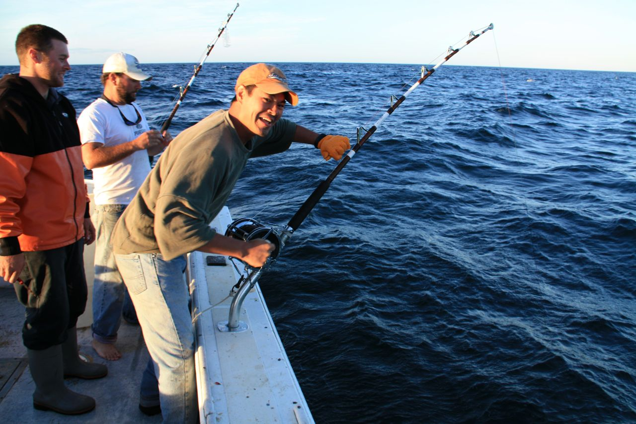 cape cod shark fishing david | world-adventurer, Fishing Bait