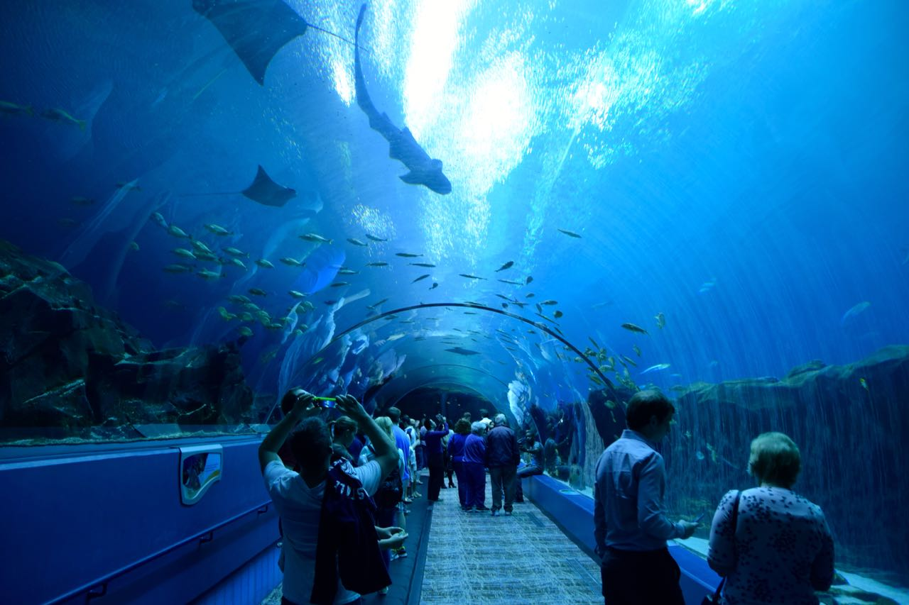 Atlanta Aquarium Glass Tunnel World-Adventurer